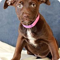 Adopt A Pet :: Jenna - Waldorf, MD