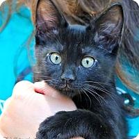 Adopt A Pet :: Squib - Rocklin, CA