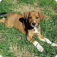 Adopt A Pet :: Idele - New Oxford, PA