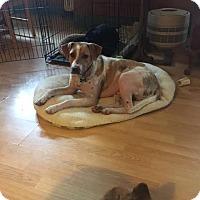 Adopt A Pet :: Abel - Tonawanda, NY