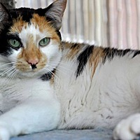 Adopt A Pet :: Sonia - Chicago, IL