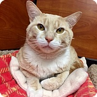 Adopt A Pet :: Perkings - Long Beach, NY