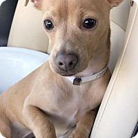 Adopt A Pet :: Peanuckle - Weston, FL