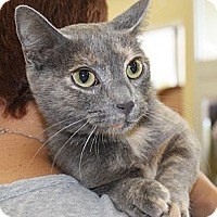 Adopt A Pet :: LuLu - Vero Beach, FL