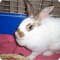 Adopt A Pet :: BunnyWunny - Williston, FL