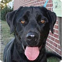 Adopt A Pet :: Louie-PENDING - kennebunkport, ME