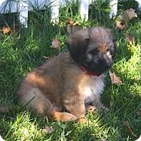 Adopt A Pet :: SHANE - Mission Viejo, CA
