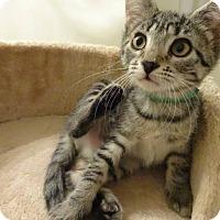 Adopt A Pet :: Maxey - Colmar, PA