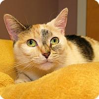 Adopt A Pet :: Eloise - Milford, MA