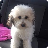 Adopt A Pet :: Mogley - Las Vegas, NV