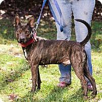 Adopt A Pet :: Cajun - Marion, NC