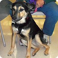 Adopt A Pet :: Jane - Camden, SC