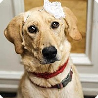Adopt A Pet :: Lukah (now Barbie) - Waco, TX