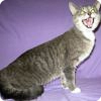 Adopt A Pet :: Zsa Zsa - Powell, OH