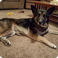 Adopt A Pet :: Kelly - Aurora, IL