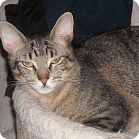 Adopt A Pet :: Luca - Roseville, MN