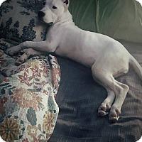 Adopt A Pet :: Isa-FL - Virginia Beach, VA