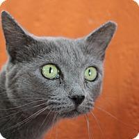 Adopt A Pet :: Tiffany - Sarasota, FL