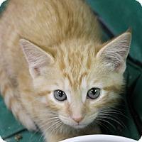 Adopt A Pet :: Blaze - Medina, OH