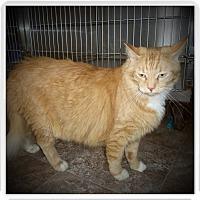Adopt A Pet :: PUMKIN - Medford, WI