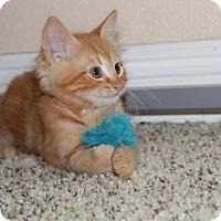 Adopt A Pet :: Buoy - Rocklin, CA
