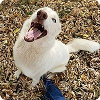 Adopt A Pet :: Xena - Newcastle, OK