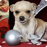 Adopt A Pet :: Princess - Picayune, MS