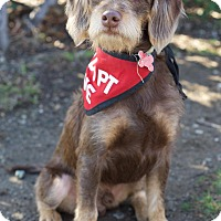 Adopt A Pet :: Bond - Van Nuys, CA