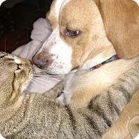 Adopt A Pet :: Ollie - Providence, RI