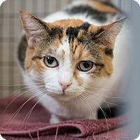 Adopt A Pet :: Holly - Houston, TX