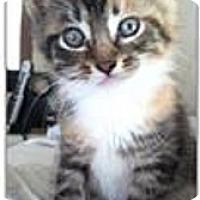 Adopt A Pet :: Lilly - Hazard, KY