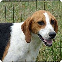 Adopt A Pet :: Walker - Mebane, NC
