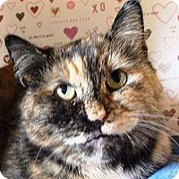 Adopt A Pet :: Evie - Albany, NY