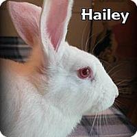 Adopt A Pet :: Hailey - Williston, FL