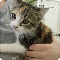 Adopt A Pet :: Fannie - Troy, OH