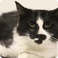 Adopt A Pet :: Simon - Sacramento, CA