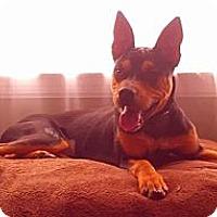 Adopt A Pet :: Molly - Hamilton, ON