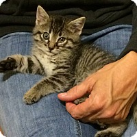 Adopt A Pet :: Five - Ogallala, NE