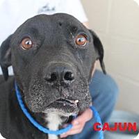 Adopt A Pet :: Cajun - Waycross, GA