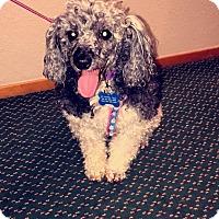 Adopt A Pet :: Flower - Gig Harbor, WA