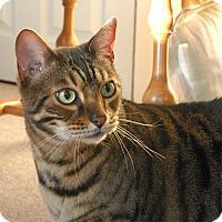 Adopt A Pet :: Fauna - Winchendon, MA