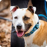 Adopt A Pet :: Biscuit - Rockaway, NJ