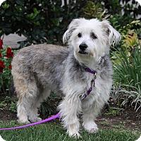 Adopt A Pet :: ALEXANDRA - Newport Beach, CA