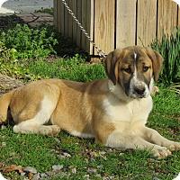 Adopt A Pet :: NINA - Bedminster, NJ
