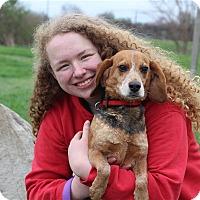 Adopt A Pet :: Remi - Elyria, OH