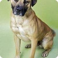 Adopt A Pet :: Walt - Brooklyn, NY