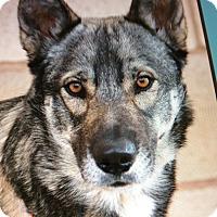 Adopt A Pet :: FREKI VON FARGO - Los Angeles, CA
