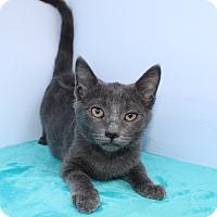 Adopt A Pet :: Anaabelle - Santa Monica, CA