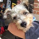 Adopt A Pet :: Leeotta