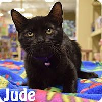 Adopt A Pet :: Jude - Las Vegas, NV